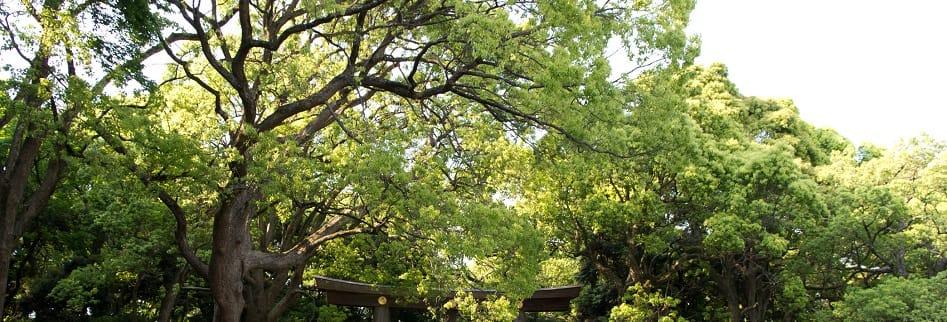 東京・代々木  心の声を聴いてみませんか?チャネリングであなたと自由な生き方をつくるスピリチュアルヒーリング  佐久間可奈の店
